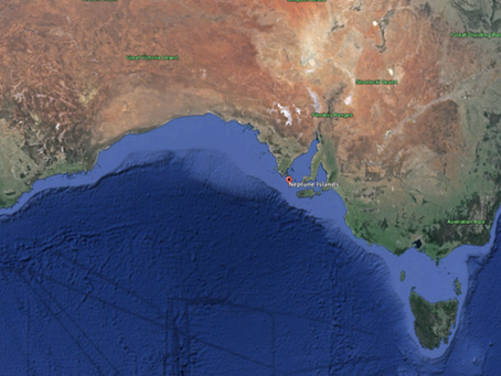 Finding the Last Dragons: Great Whites in South Australia