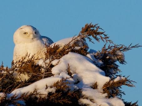 Wild Cape Cod Notebook: Winter
