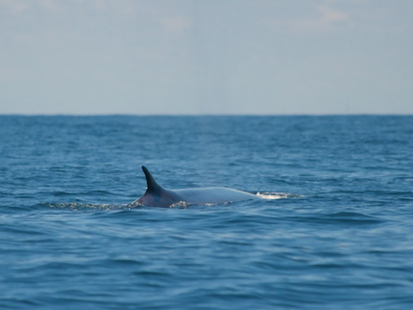 Cetaceans on the Outer Cape