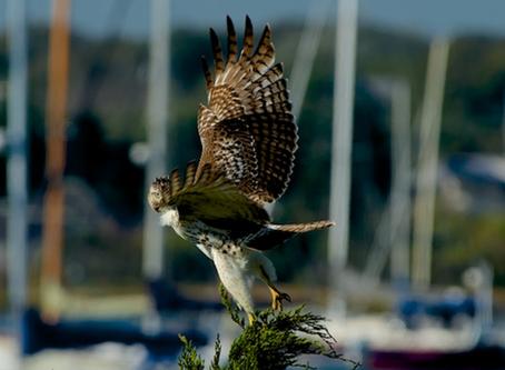 Wild Cape Cod Notebook: Autumn