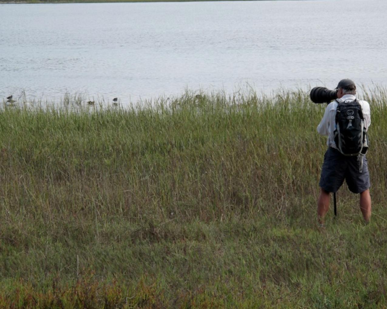 Shooting shorebirds near Del Mar, CA