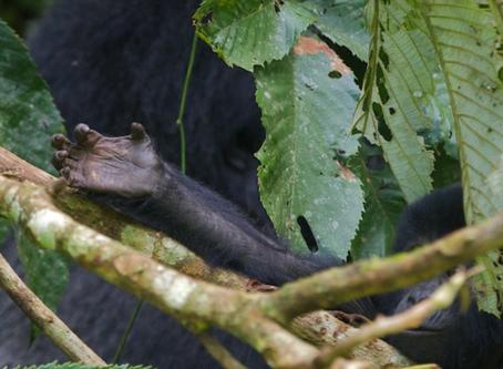 Viral Rebound Affect: Our Conservation message goes Global