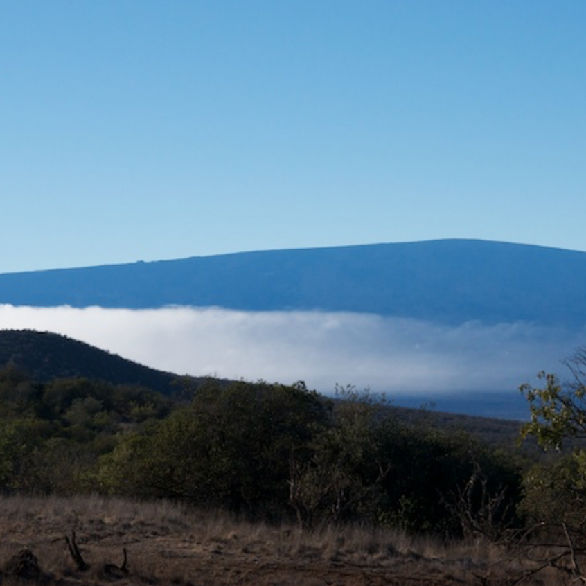 Mauna Loa from Hakalau National Forest