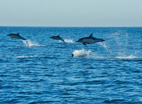 South Africa Spring Journal – False Bay