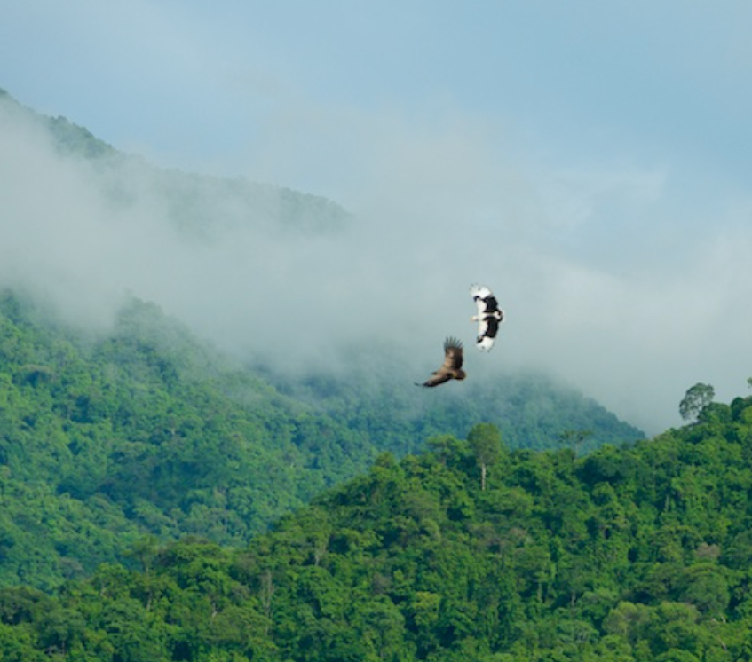 Palm Vultures over the Mahale Mountains