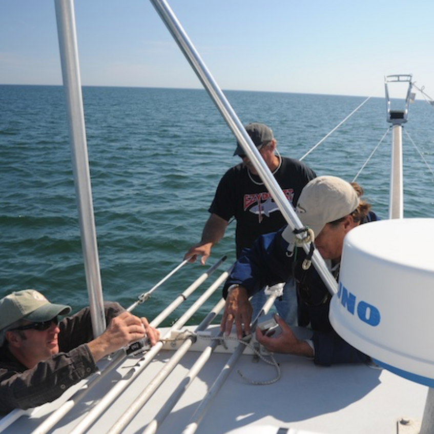 Fitting harpoon with a satellite tag