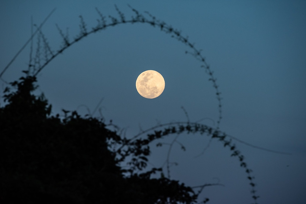 Full moon over Amazonia