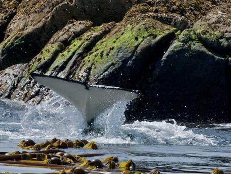 BC Road Trip: Orca