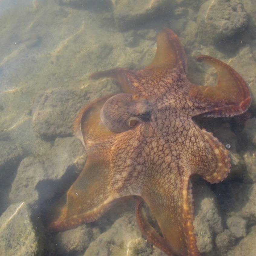 Octopus breaks free