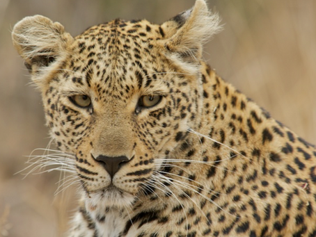 South Africa Spring Journal – The Lowveld