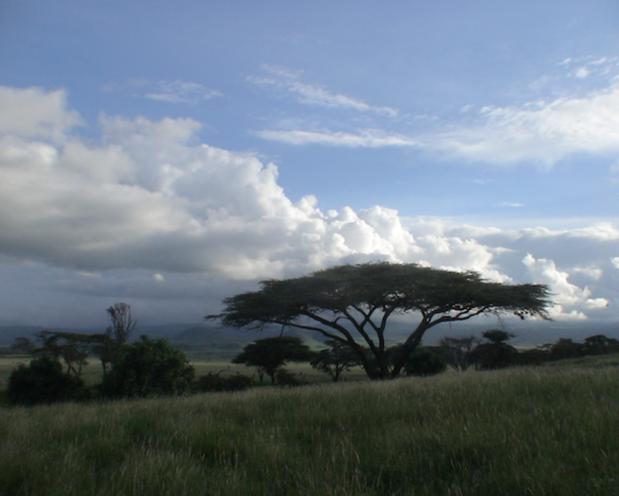 Mt Kenya foothills