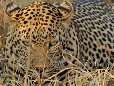 South Africa Spring Journal – Kalahari