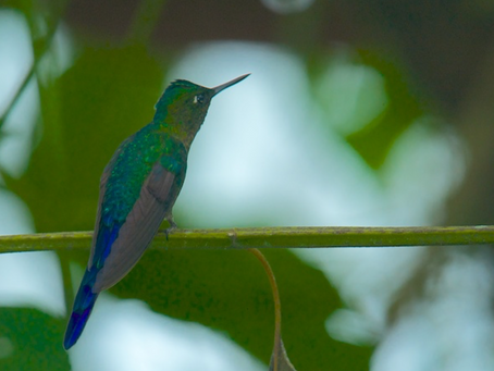 Ecuador: In the Cloud Forest