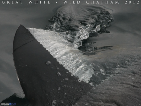Wild Chatham 2012 – The Poster