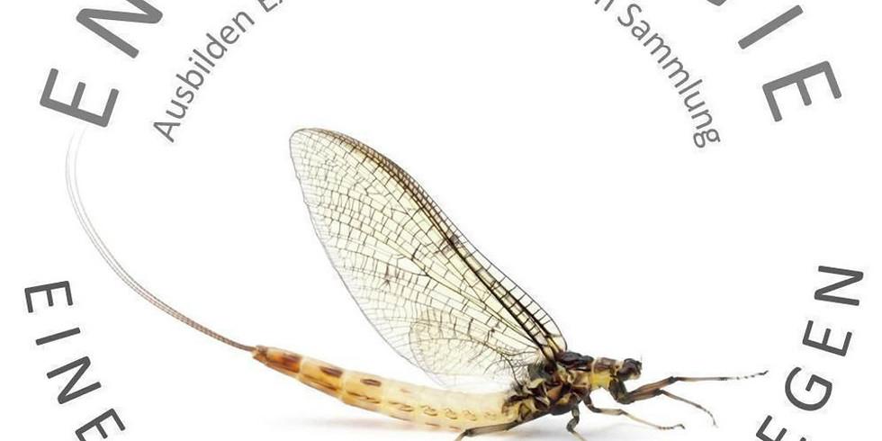 Vernissage Biodiversität Fliessgewässer