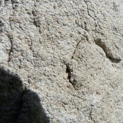 Verrucaria sp. auf Stein