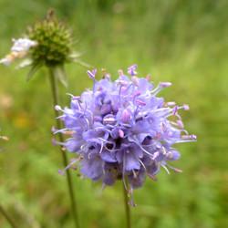 Wertvolle Blühpflanzen