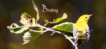 Vermont's Winter Birds