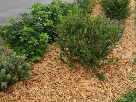 Woodchips for Groundcover