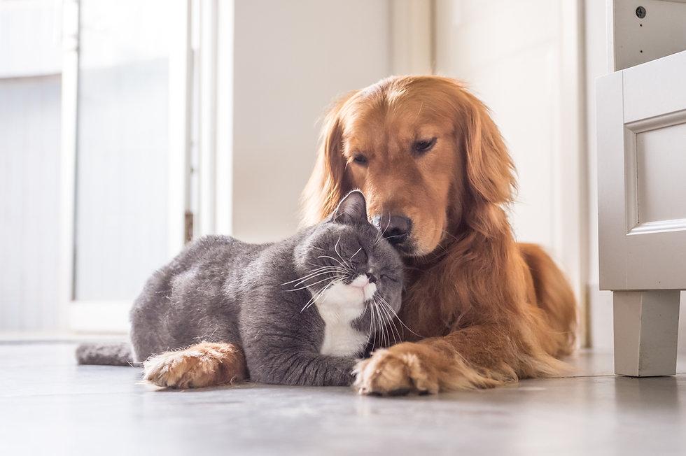 A dog and cat cuddling.