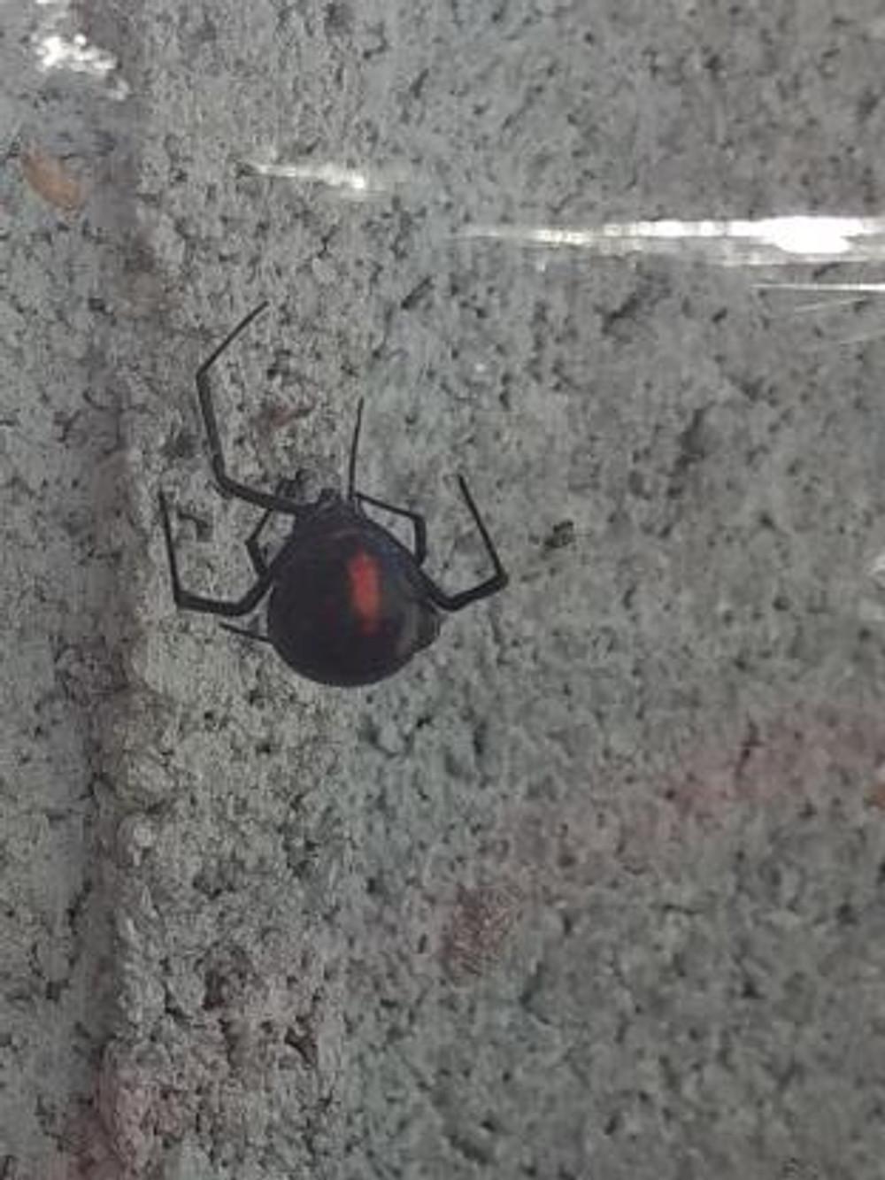 tiny house sept a4-spider