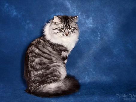 выставка кошек 8-9 сентября   2018 г. в Москве