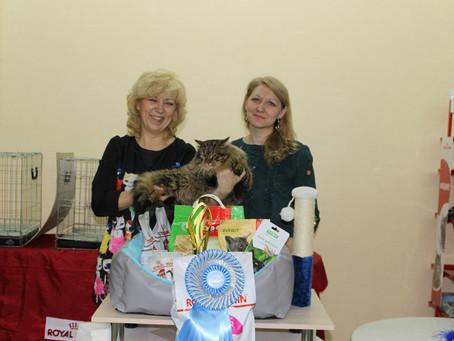 выставка кошек 10-11 февраля  2018 г. в Вологде