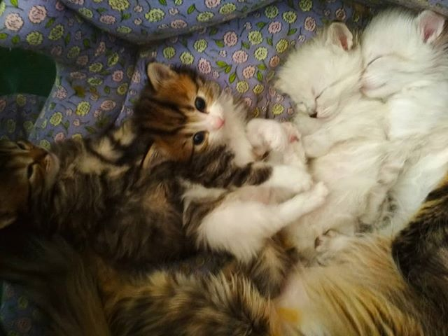 Юпитер с сестрой и братиками