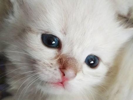У нас котята!