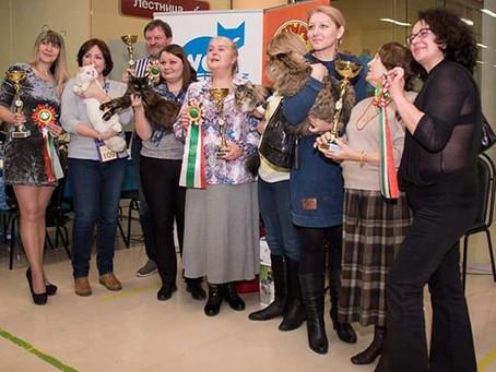 выставка кошек 2-3 декабря   2017 г. в Москве