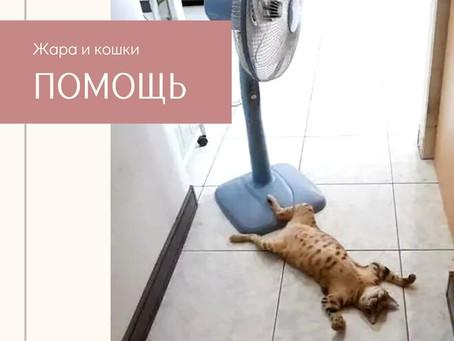 Как выжить в жару кошке.