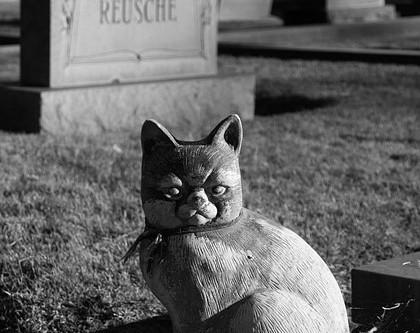 У каждого питомника свое кладбище.