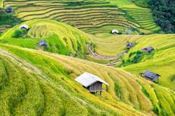 country-crop-fields-vietnam