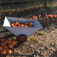 PickYourPumpkin.jpg