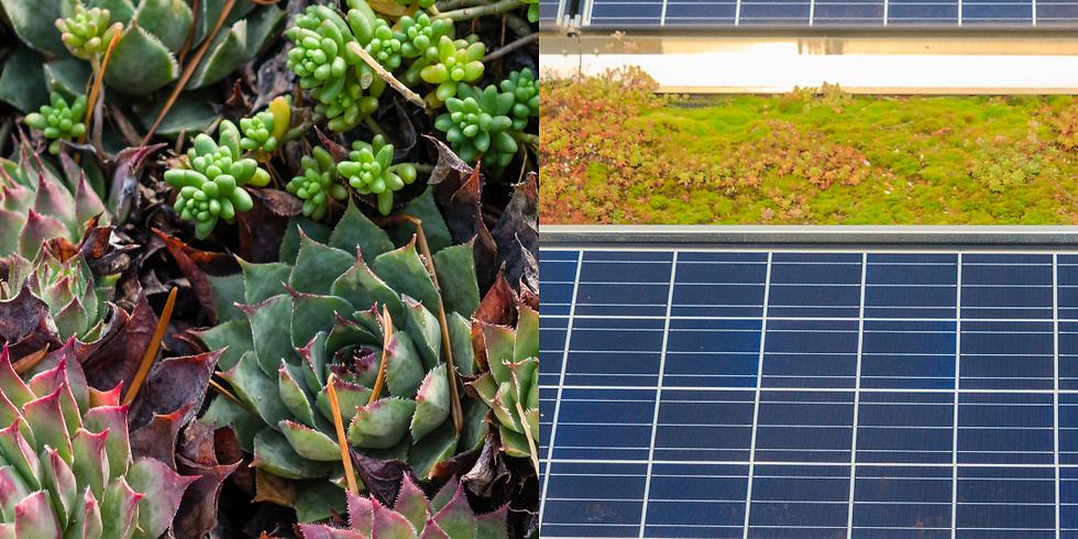 Groen en zonnepanelen op 1 dak. Haal het meeste uit uw dak!