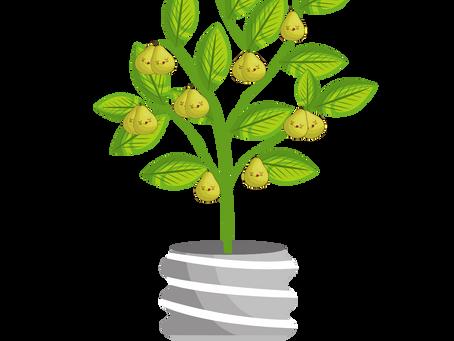 Plant een perenboom!
