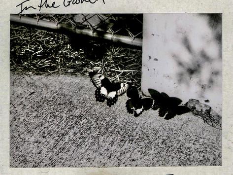 Listen: Angeles releases sophomore single 'In The Garden' via Sunset Pig Records