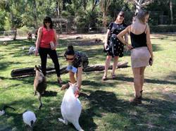 Gorge-Wildliife-Park-Feeding-kangaroos.j