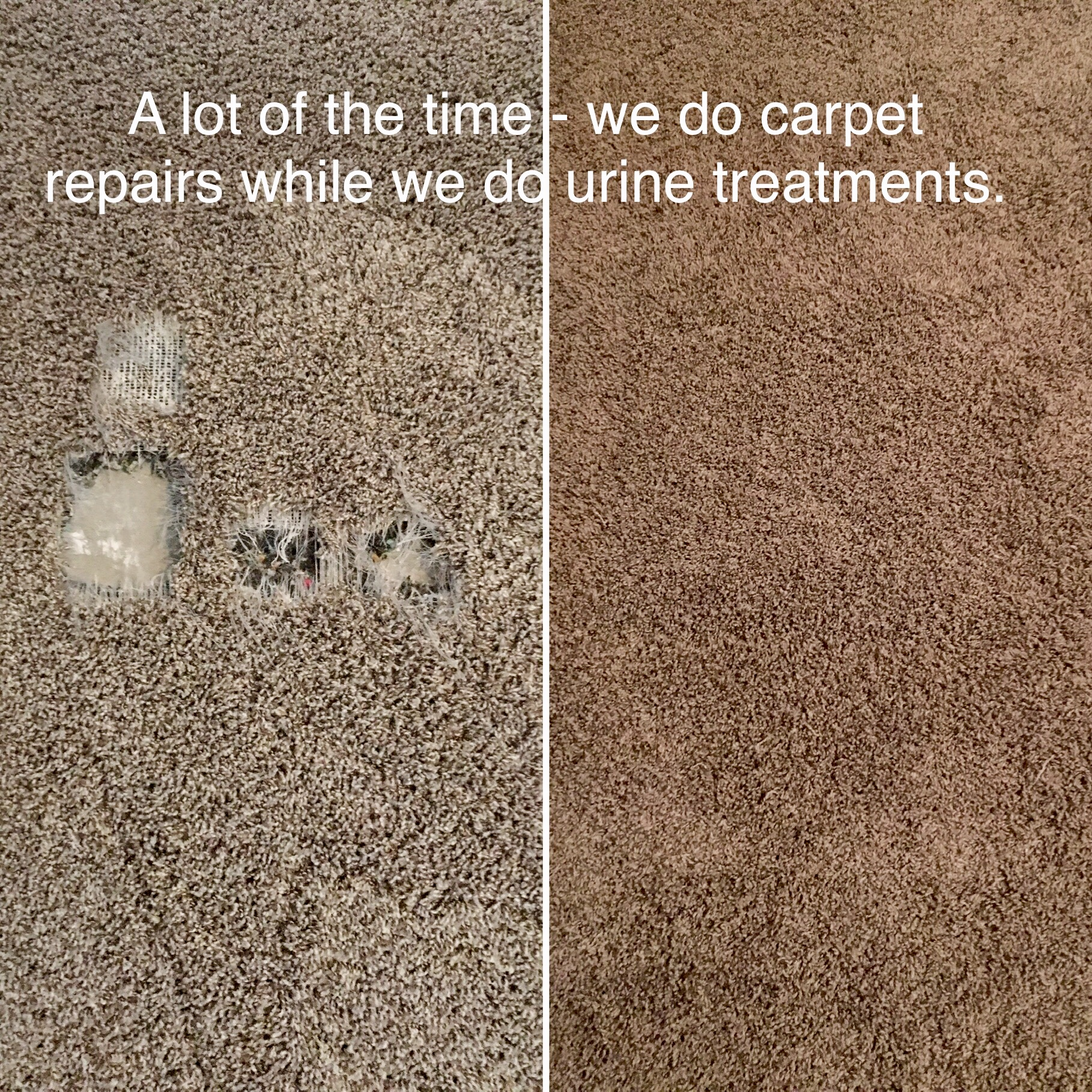 Carpet Repair Fix Pet damage