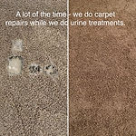 carpet repair  pet damage rpair