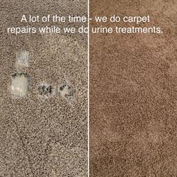Carpet Repair Fix Pet damage