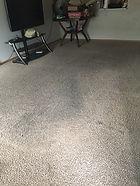 Carpet Cleaning Professional Fargo Moorhead West Fargo