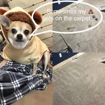Pet Potty / Odor Removal