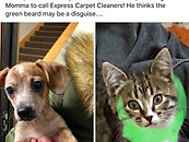 Express Carpet Cleaners Pet Stains Fargo West Fargo Moorhead