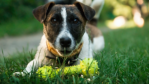 pet hospital in hutto texas