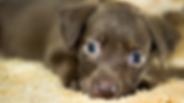 dog boarding in hutto texas