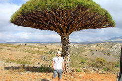 Man standing under Dragon's Blood Tree Socotra Island Yemen