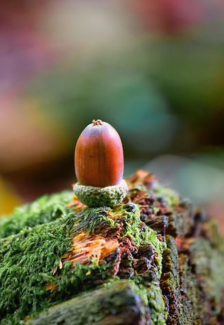 Everything grows from a seed. Acorn