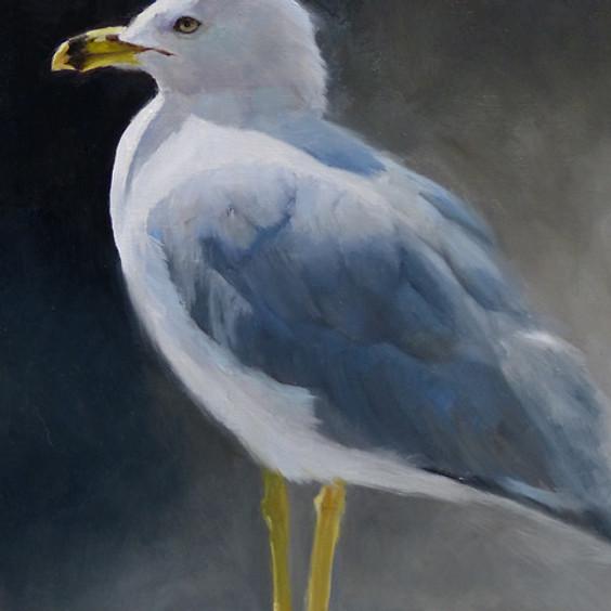 Let's Paint a Herring Gull Art Class