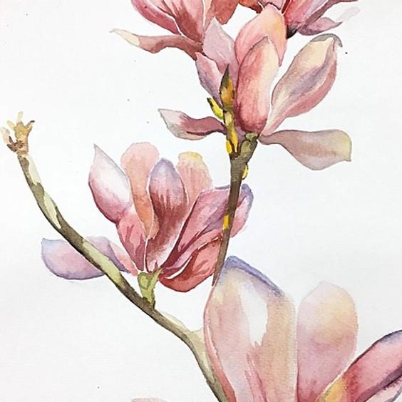 Paint Magnolias in Watercolours Art Class